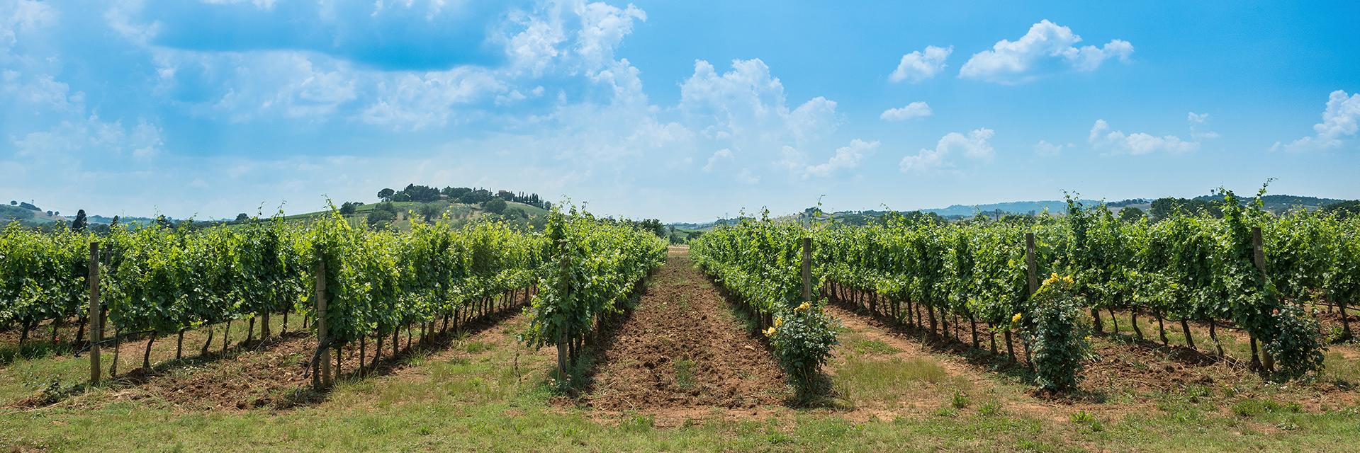 vineyardwide
