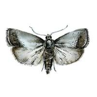 CM Pest Illustration