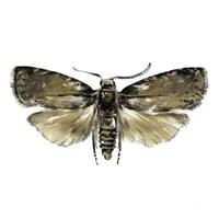 OFM Pest Illustration