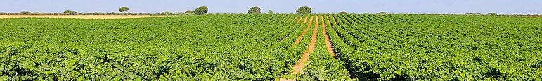 Vines footer