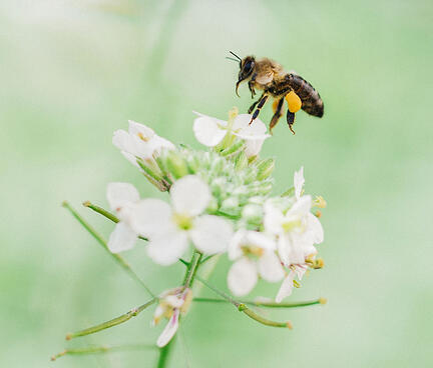 abeja-magnetmed-fauna-util