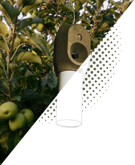recurso-manzano-con-dots-2