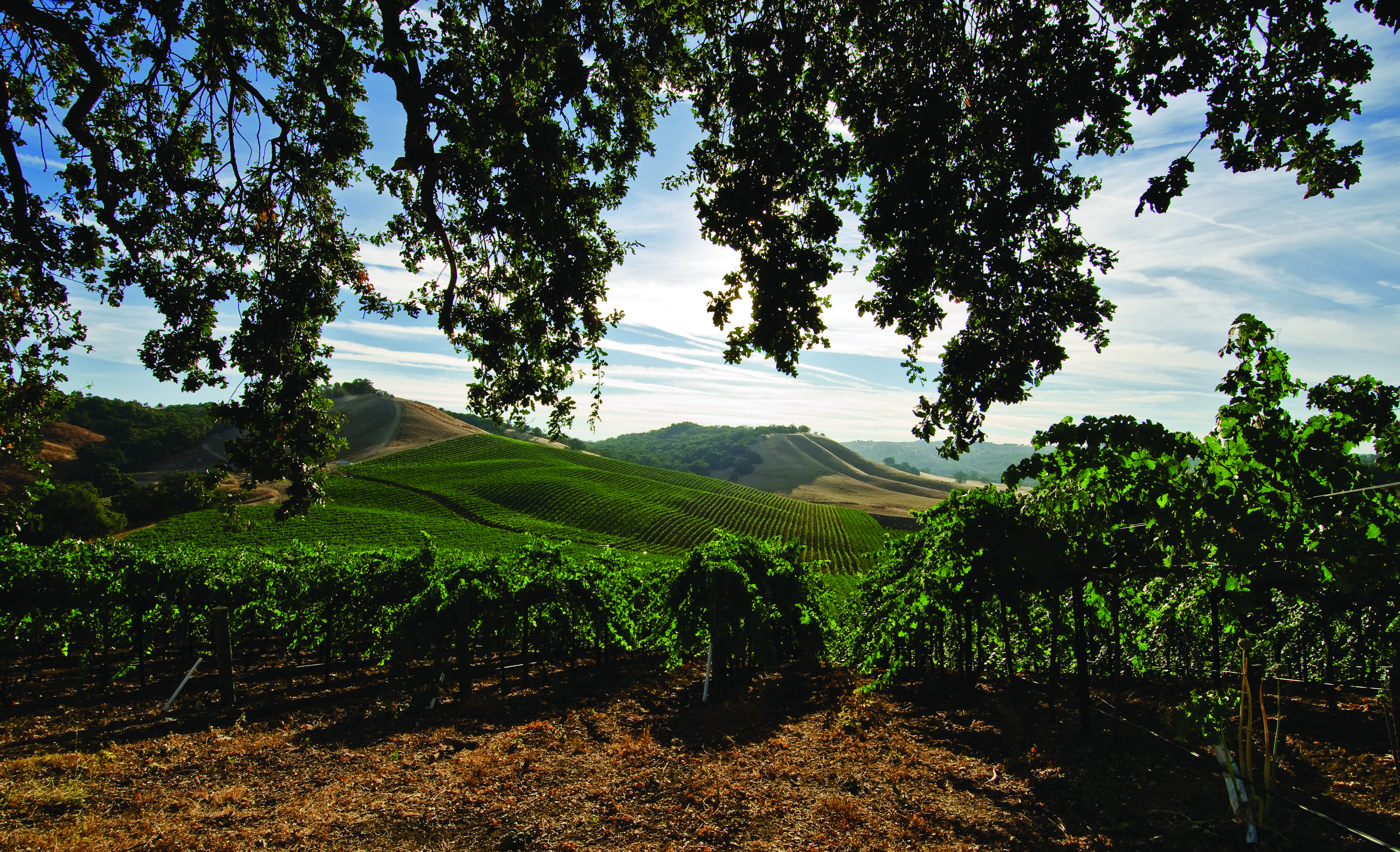 Vineyard with overhang.